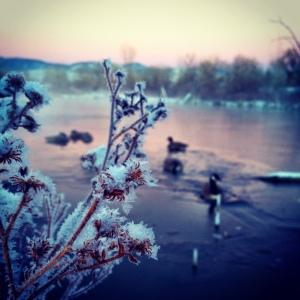 Sunrise in Fort Collins, Co // Instagram: madidrag