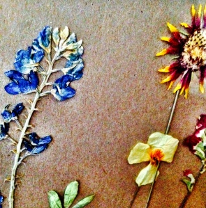 At least I still have my dried Texas wildflowers, including a bluebonnet.