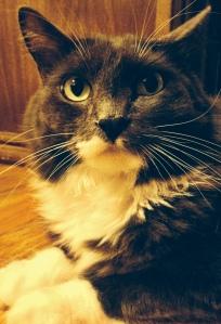 Louis is a fluffly model!