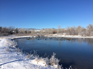 Frozen pond at Red Fox Meadows Natural Area