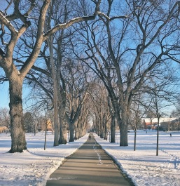 The Oval at CSU