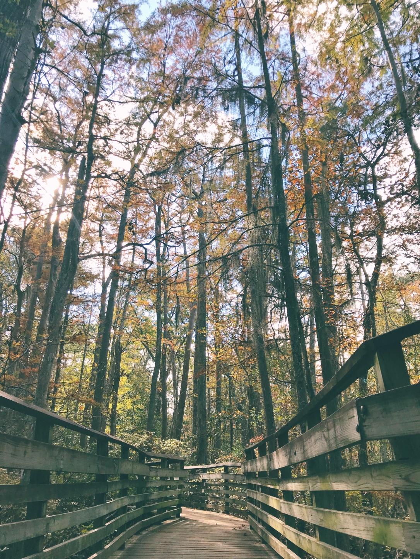 first landing state park, va 3