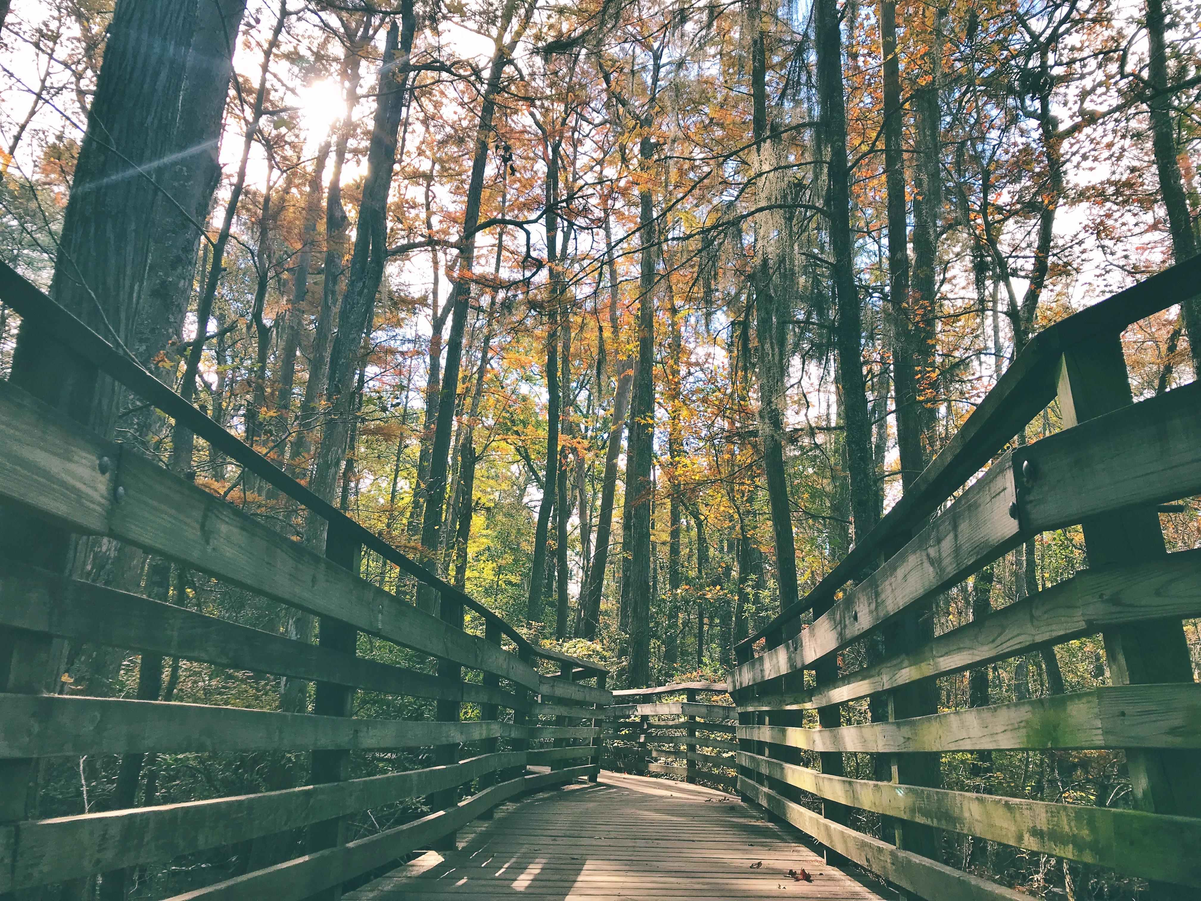 Fall in Colorado + Virginia